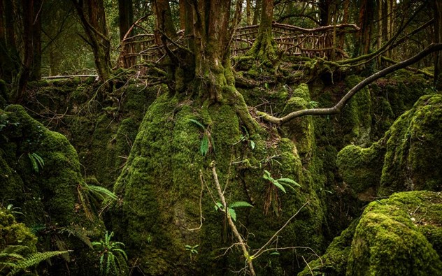 Tα 5+1 δάση του πλανήτη που μοιάζουν σαν να βγήκαν από παραμύθι