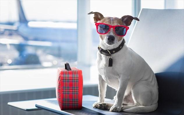 Travel tips: Τι να μην κάνετε αν ταξιδεύετε με το κατοικίδιό σας