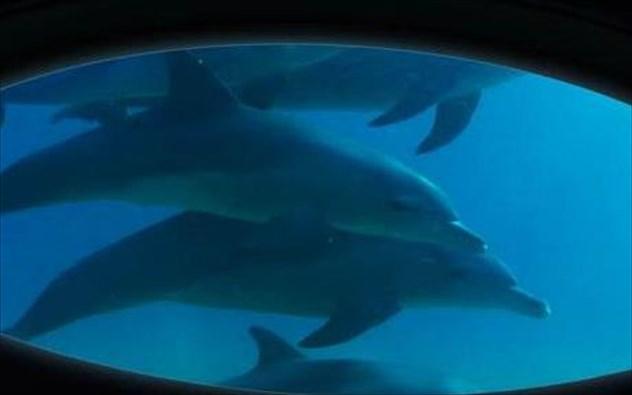 Το πρώτο υποβρύχιο σαλόνι πλοίου είναι γεγονός!Έχει καινοτόμο ηχοσύστημα που καταγράφει τους ήχους της θάλασσας!(Video)