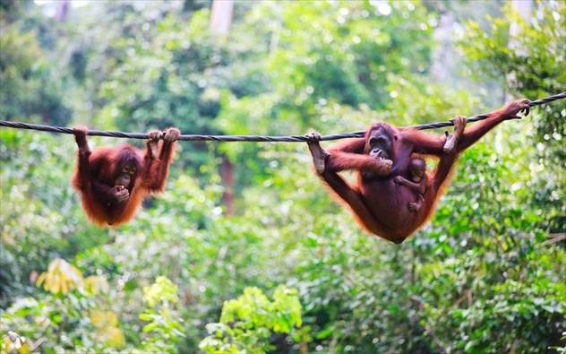 Τα 7 καλύτερα μέρη του κόσμου για να δείτε άγρια και σπάνια ζώα