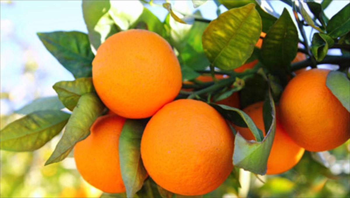 Τα διατροφικά οφέλη του πορτοκαλιού | clickatlife